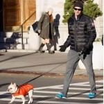 Hugh Jackman walking his adorable pup in the Canada Goose Lodge Down Jacket
