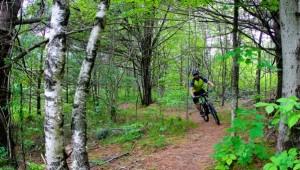 Durham-Forest--602x342