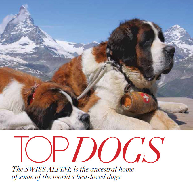 TOP DOGS: The Dogs of the Swiss Alpine