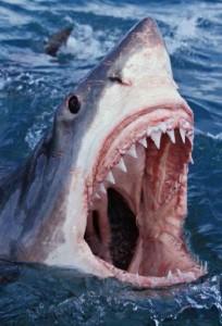 FishShark